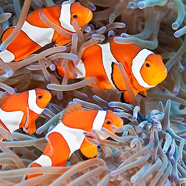 Clownfish Circle | SEA LIFE Aquarium