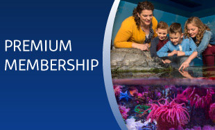 Premium Membership | SEA LIFE Arizona Aquarium