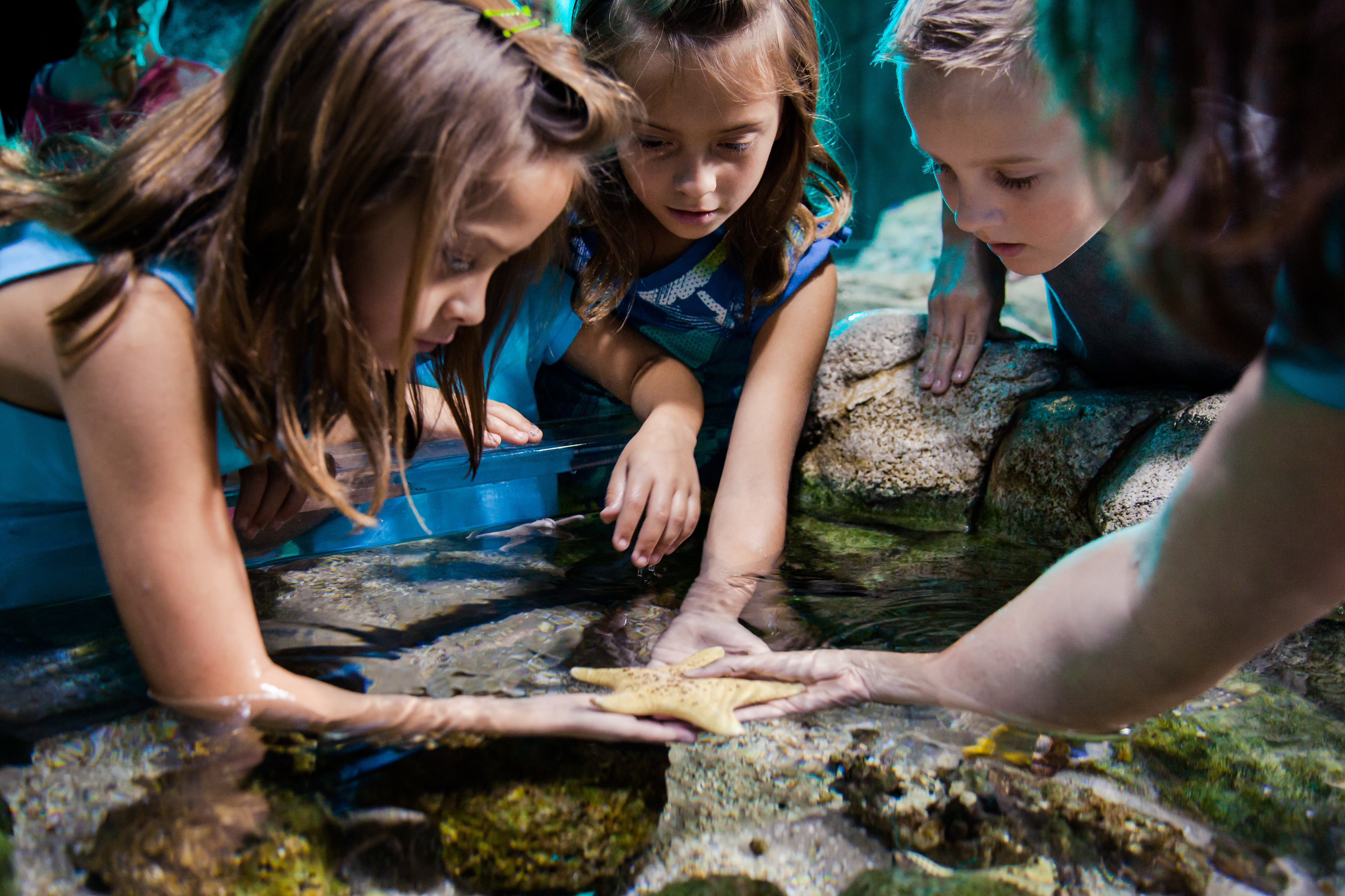 Sealife Schools Touchpool Group | SEA LIFE Aquarium