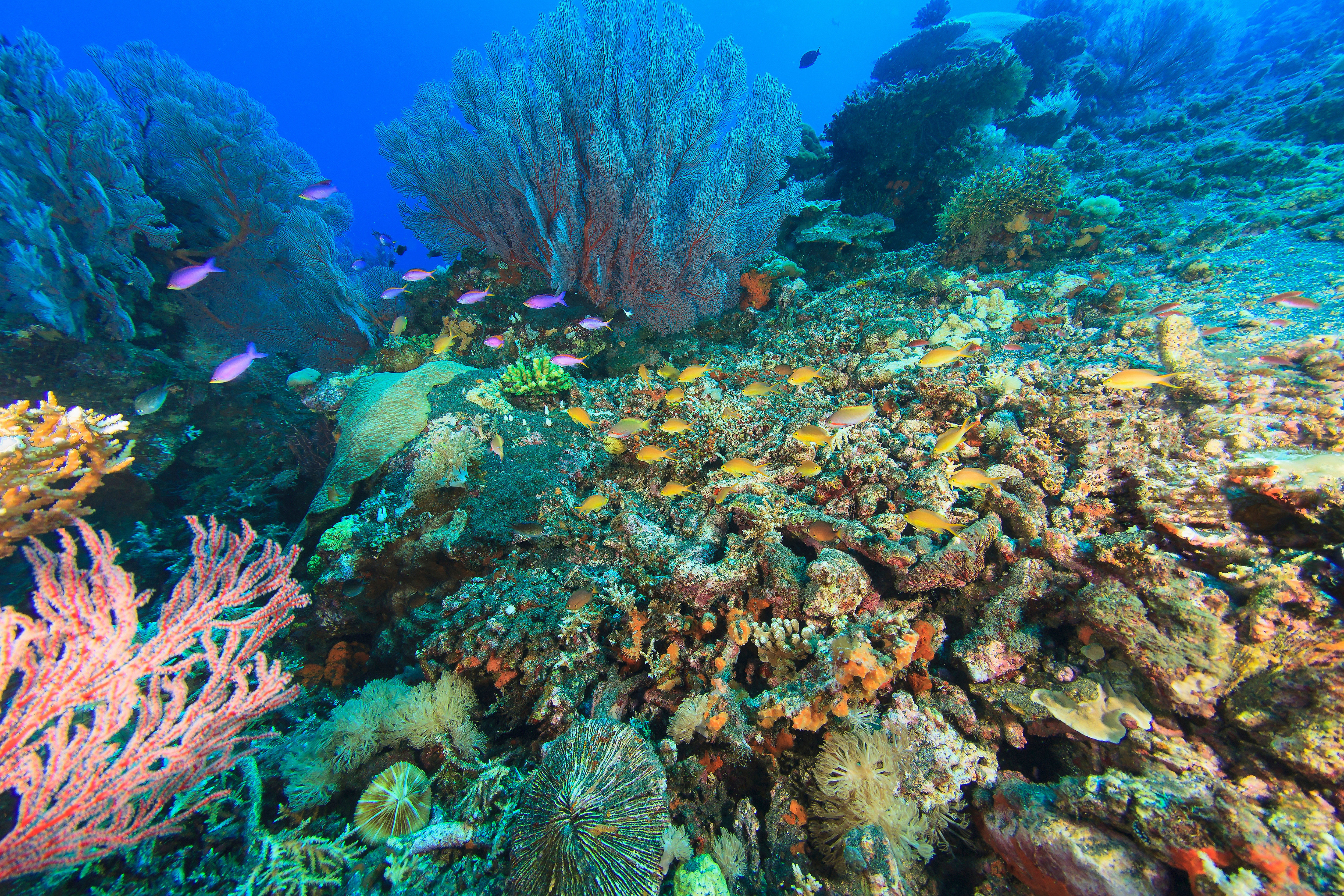 9541 Gettyimages 166265305 Fish Swimming In Coral Reef