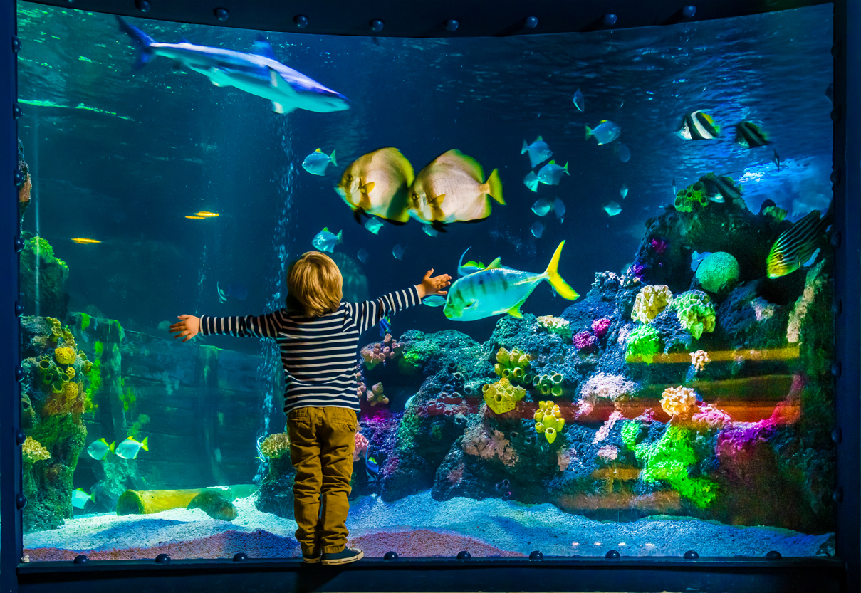 Child in front of an aquarium at SEA LIFE