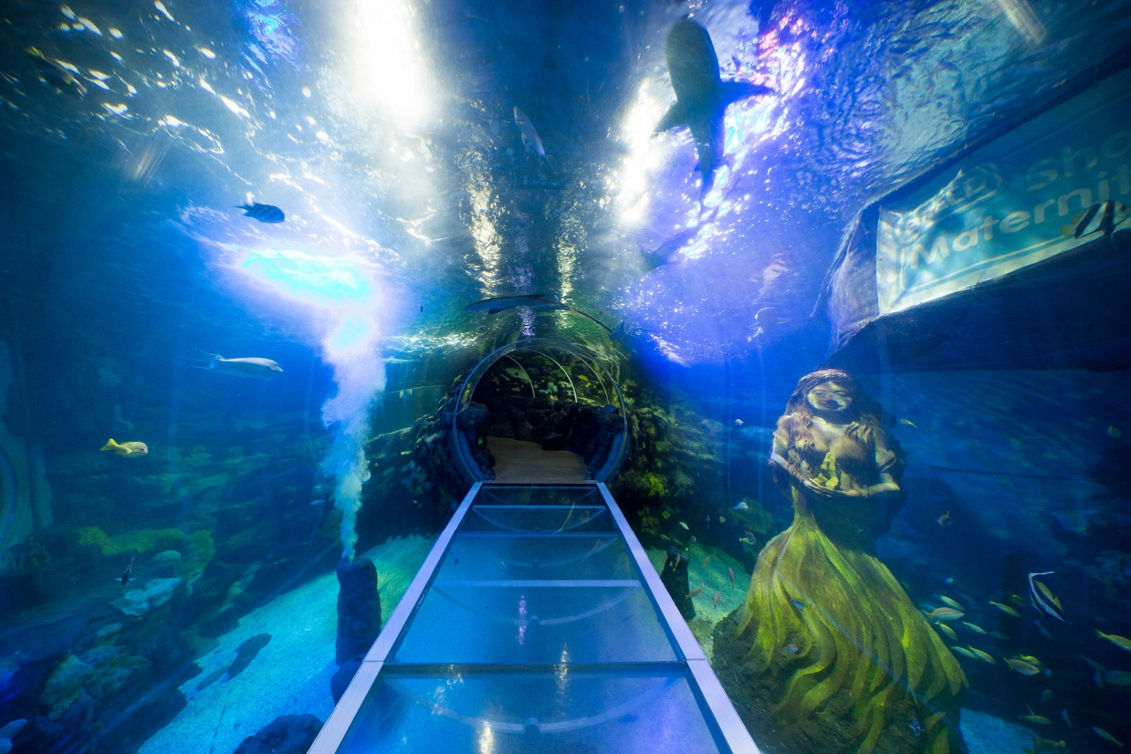The ocean tunnel at the National SEA LIFE Centre Birmingham