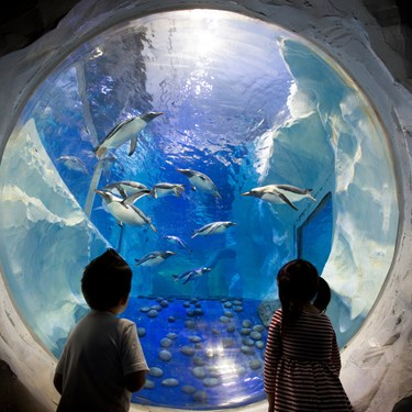 Children looking into an aquarium with penguins at SEA LIFE