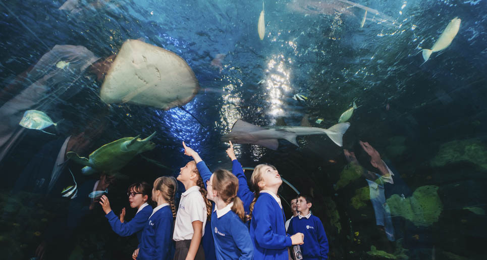 School Trip to aquarium