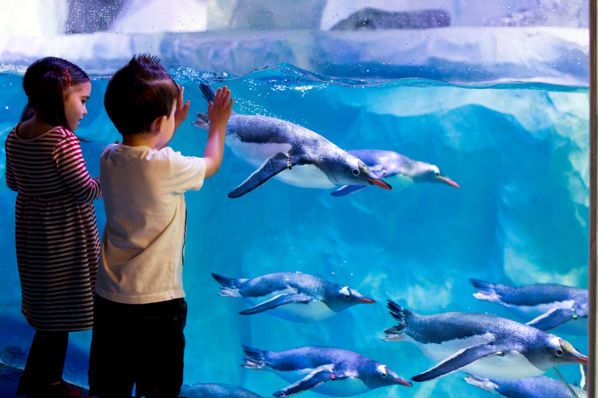 Kids W Penguins5