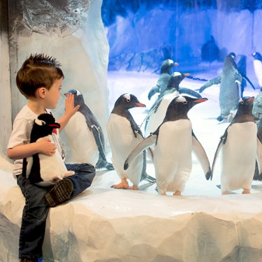 Children looking at the penguins at SEA LIFE