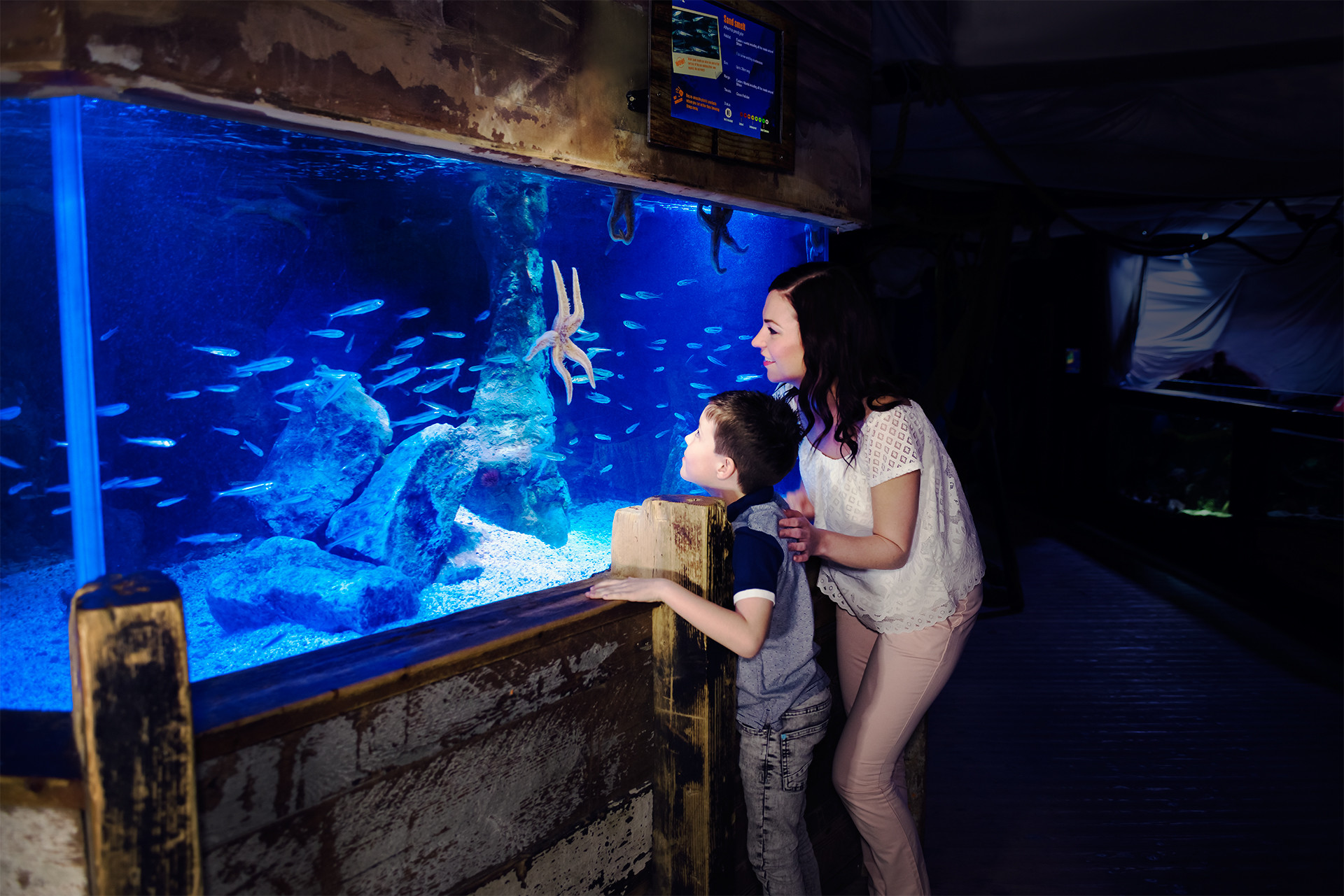 Mother and Son looking at a starfish in SEA LIFE