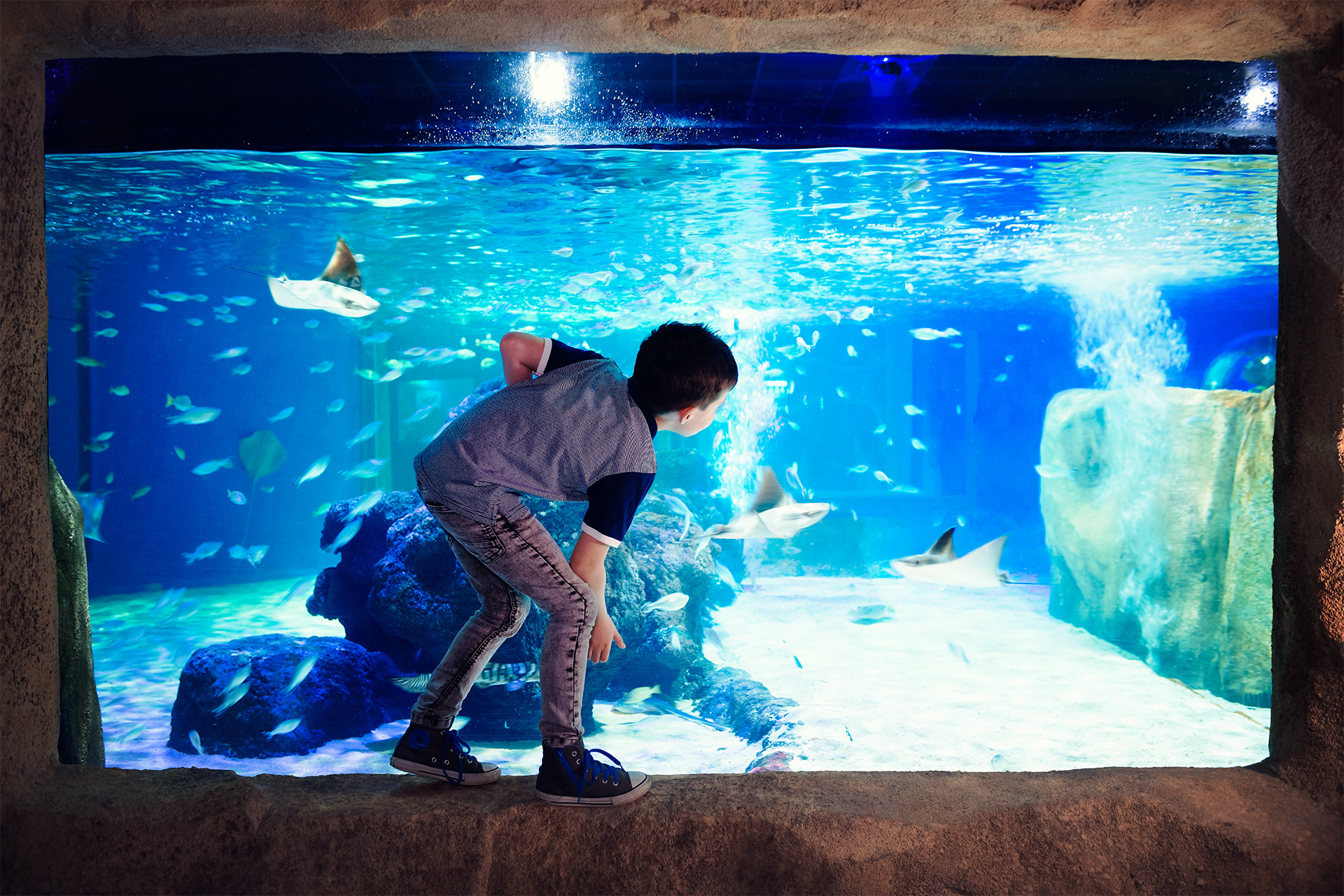 Boy Watching Stingrays in a tank at SEA LIFE