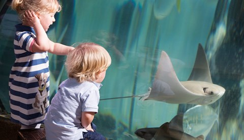 Children And Cownose Ray
