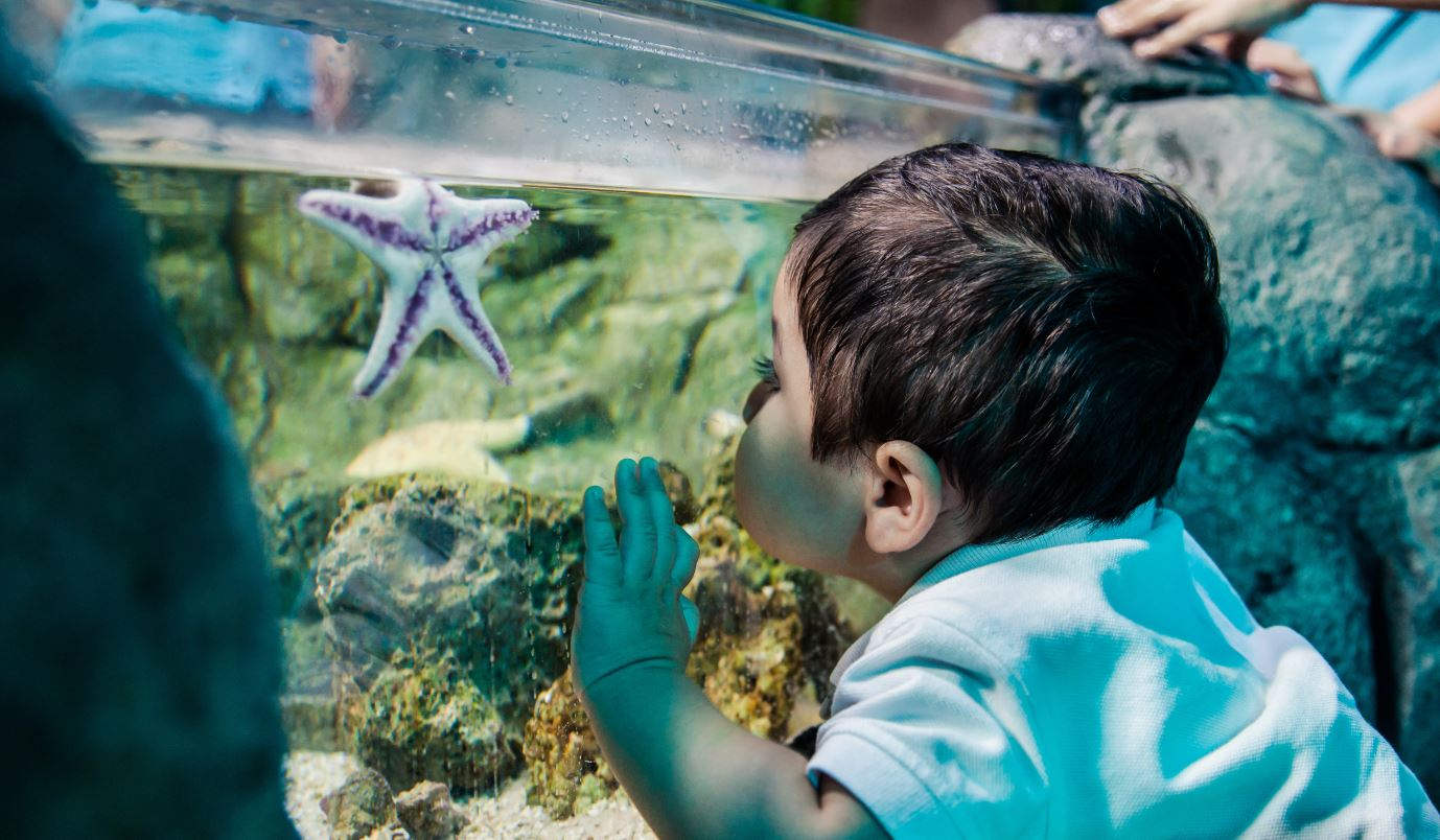 Boy And Starfish at SEA LIFE