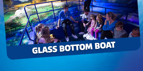 Glass Bottom Boat Experience Ticket