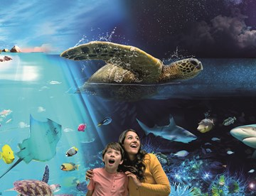 Day And Night Ocean Experience at SEA LIFE Brighton