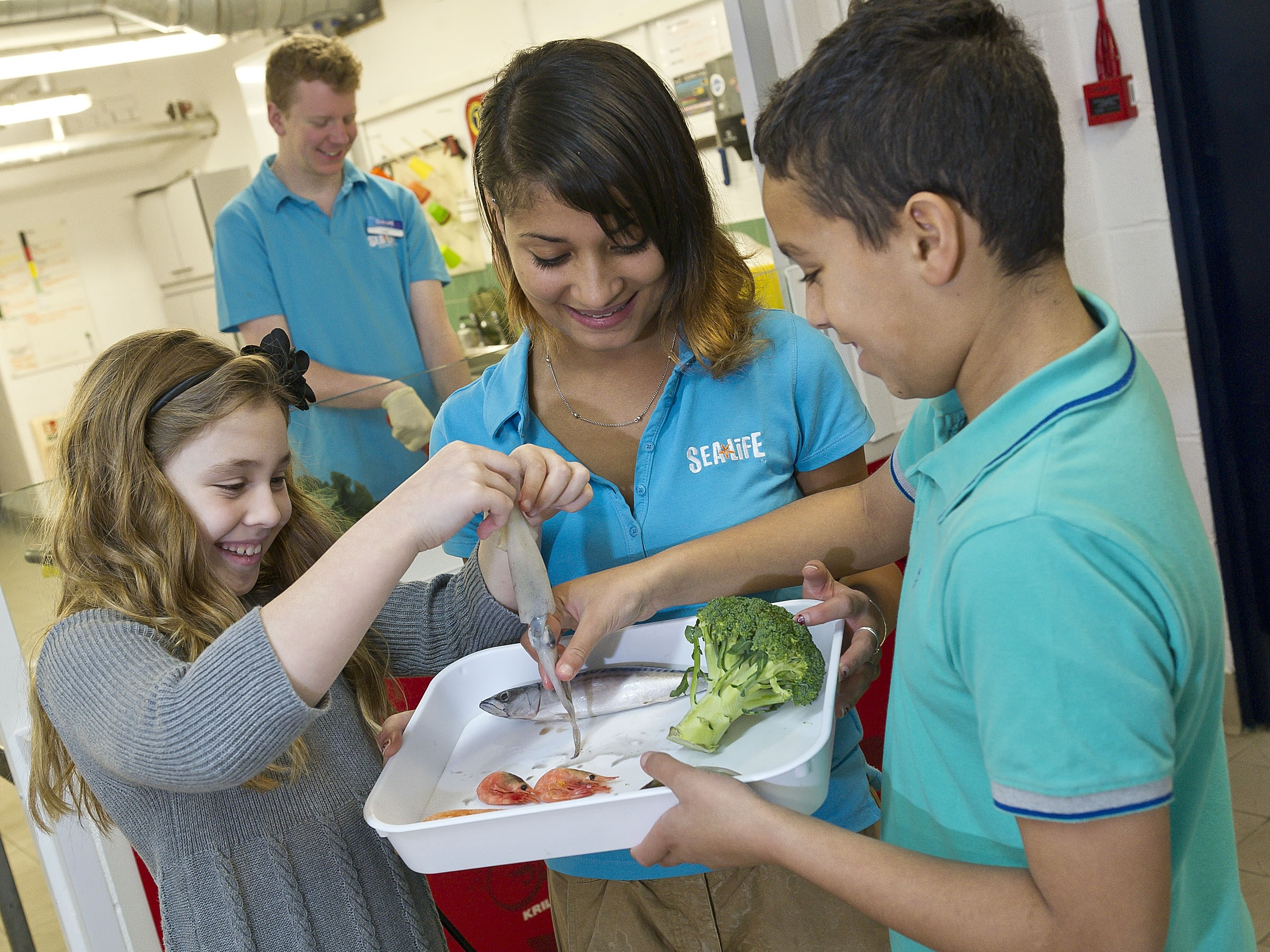 Sealife Schools Programs | SEA LIFE Aquarium