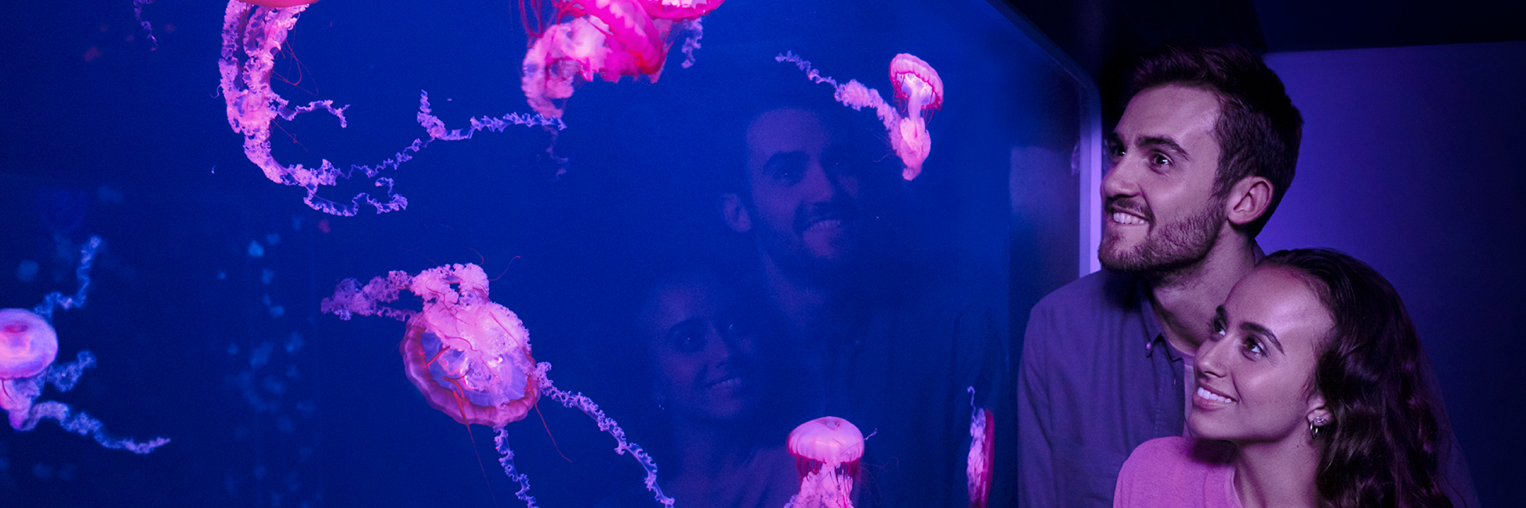Jellyfish Couple Front Facing 3000X1000 | SEA LIFE Aquarium