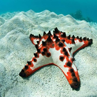 Sea Star | SEA LIFE Aquarium