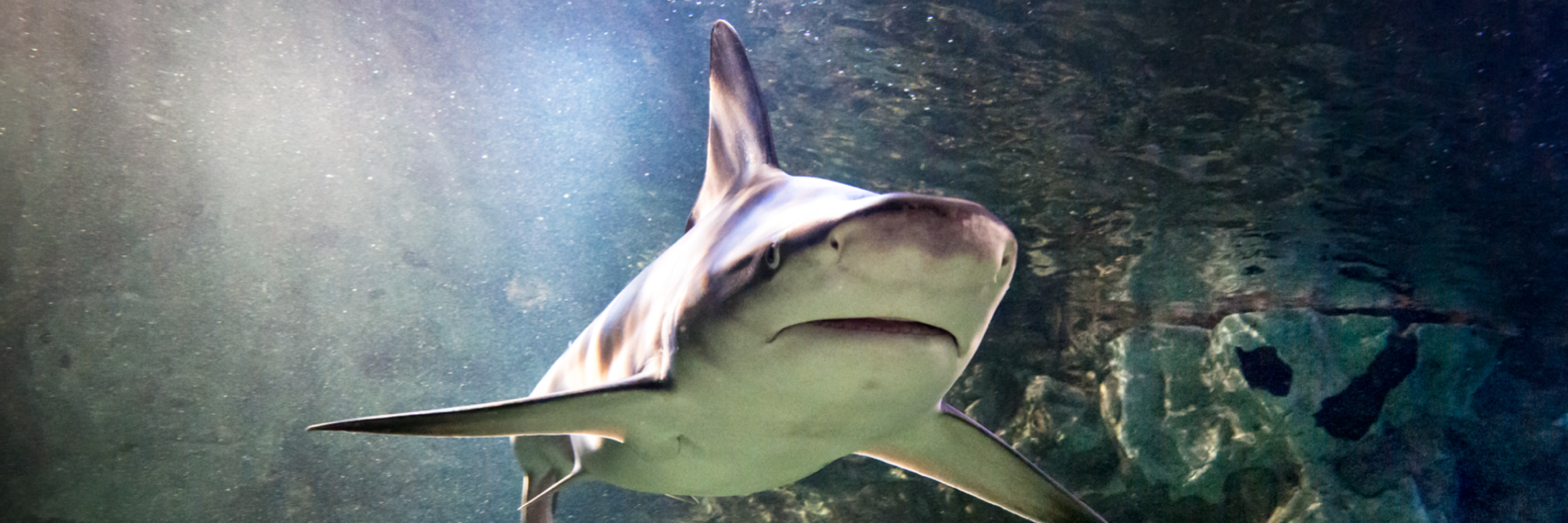 Shark 3000X1000 | SEA LIFE Aquarium