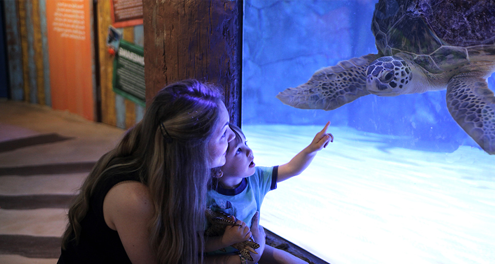 Turtle Rescue Center | SEA LIFE Grapevine Aquarium