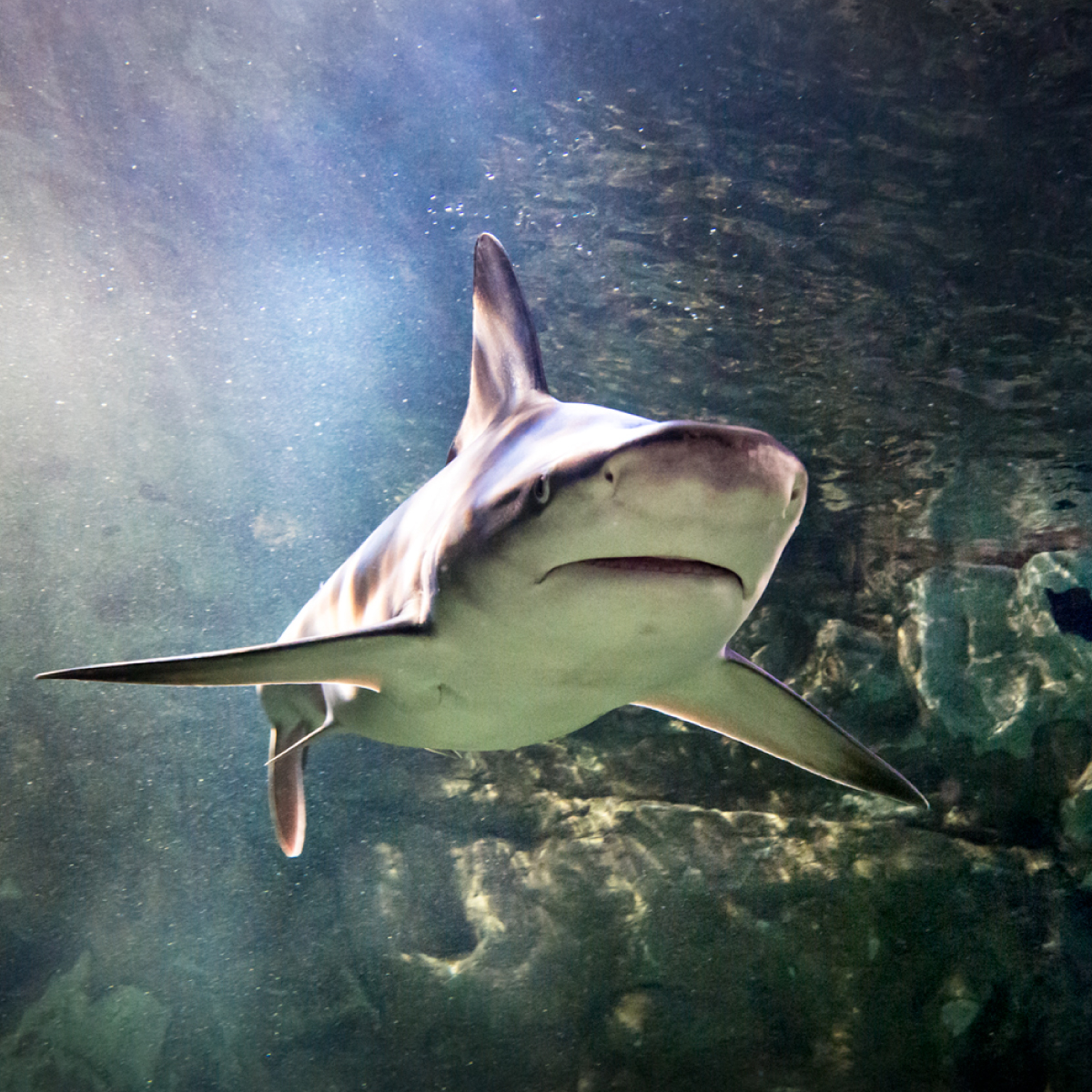 Shark | SEA LIFE Aquarium