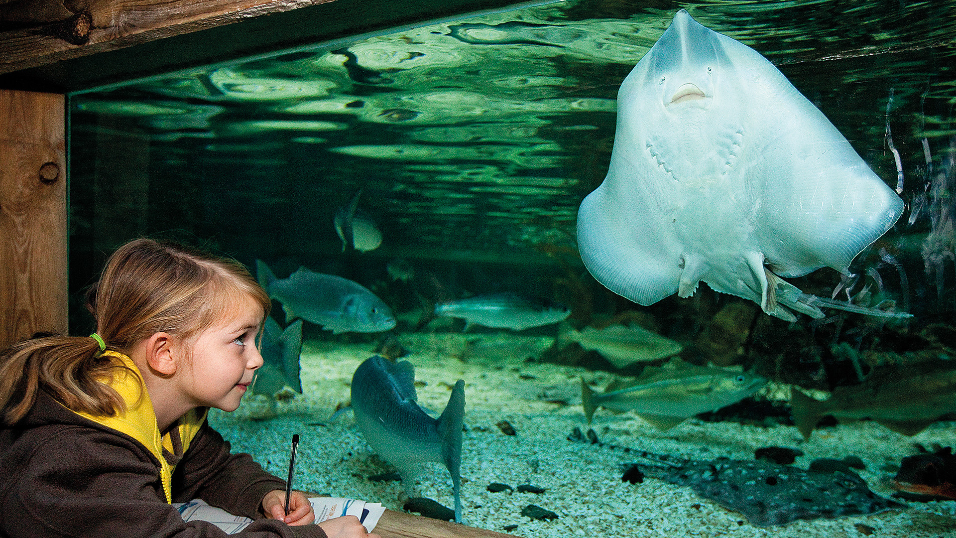 Stingray and Fish | SEA LIFE Aquarium
