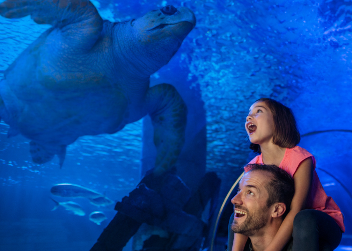 Membership | SEA LIFE Aquarium