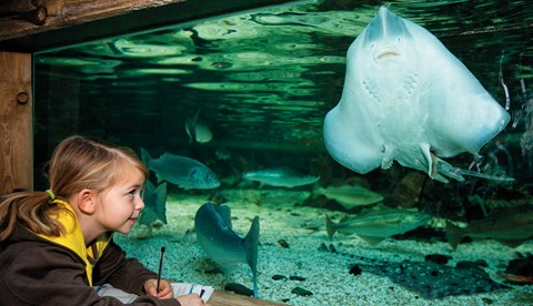 Girl And Stringray