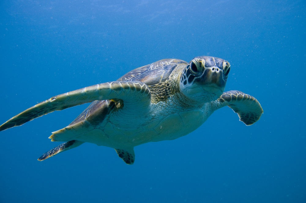 Green Sea Turtle Header | SEA LIFE Aquarium