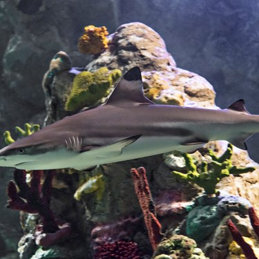 Shark at SEA LIFE | SEA LIFE Aquarium