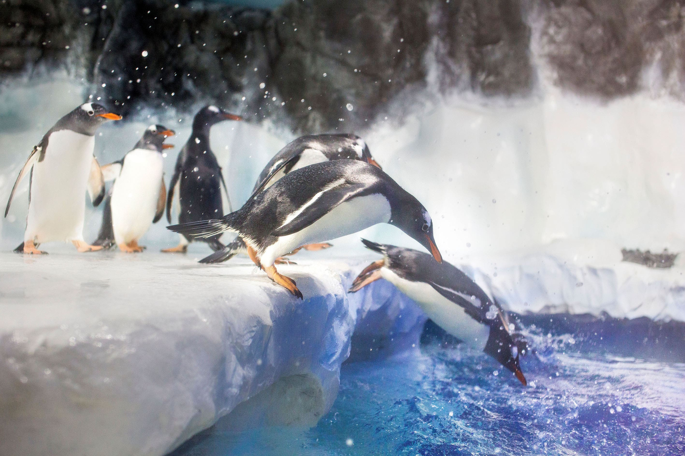 6495 SEALIFE Penguins 05 RKP Min