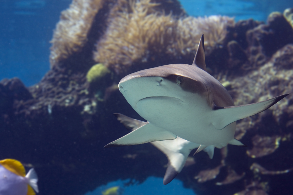 Blacktip Shark at SEA LIFE