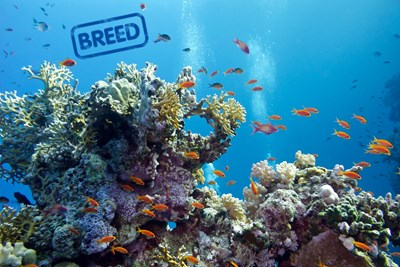 Breed Coral Reefs