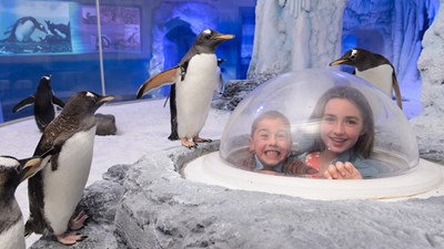 Students in a globe surrounded by penguins
