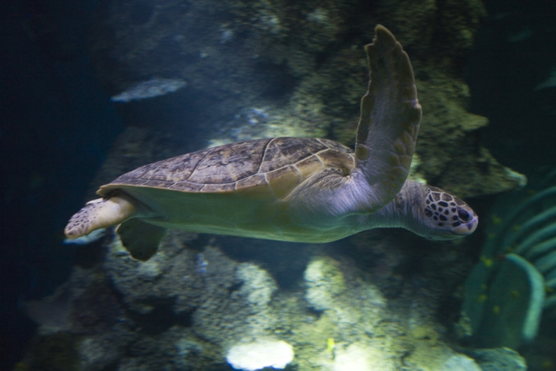 7 Species of sea turtles