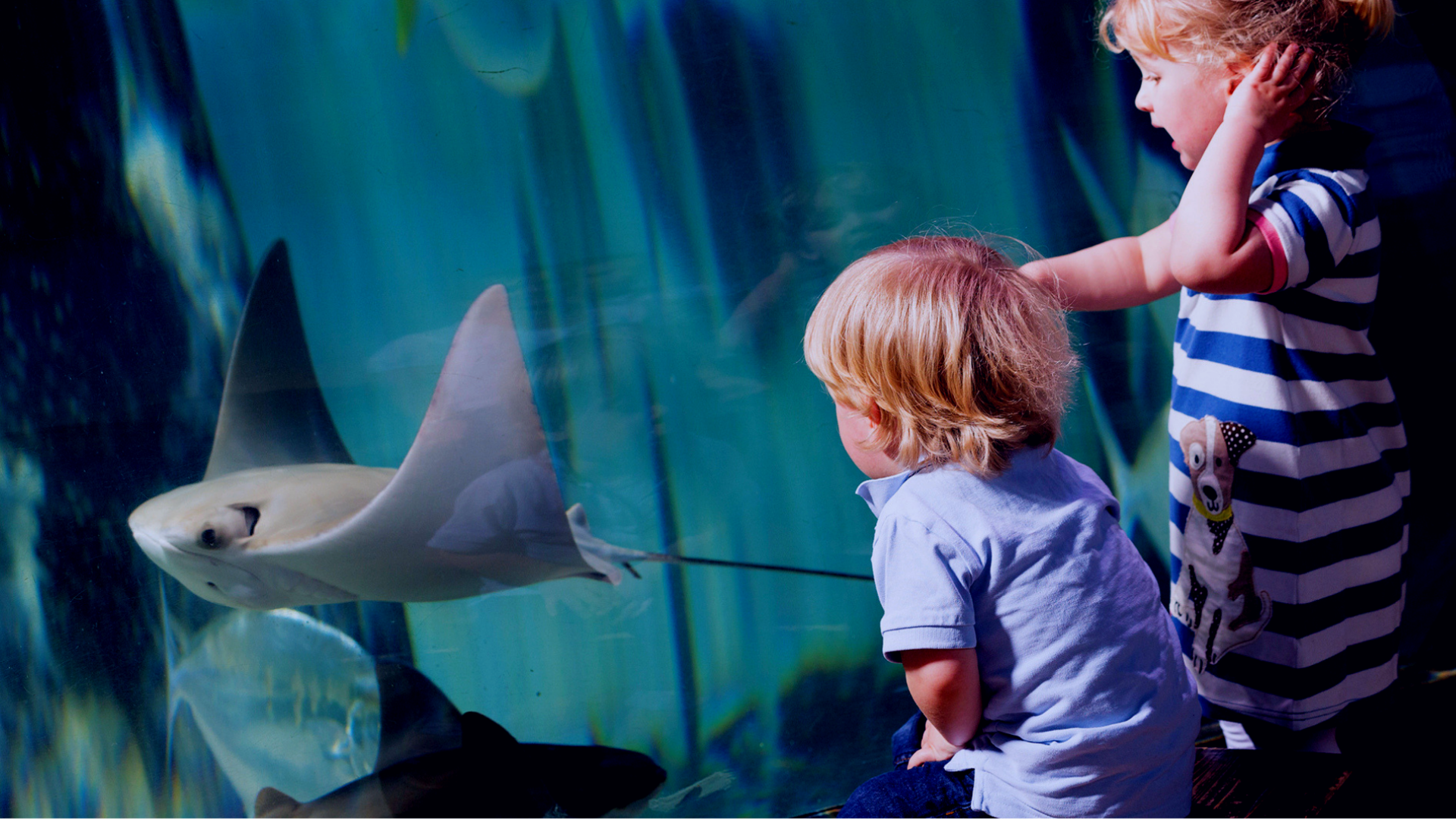 Children watching the stingrays at SEA LIFE