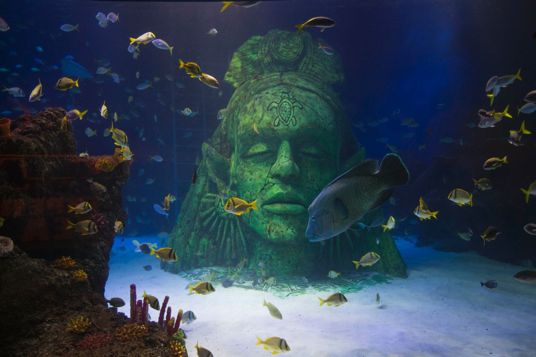 Ladys Head In Tropical Sea Tank