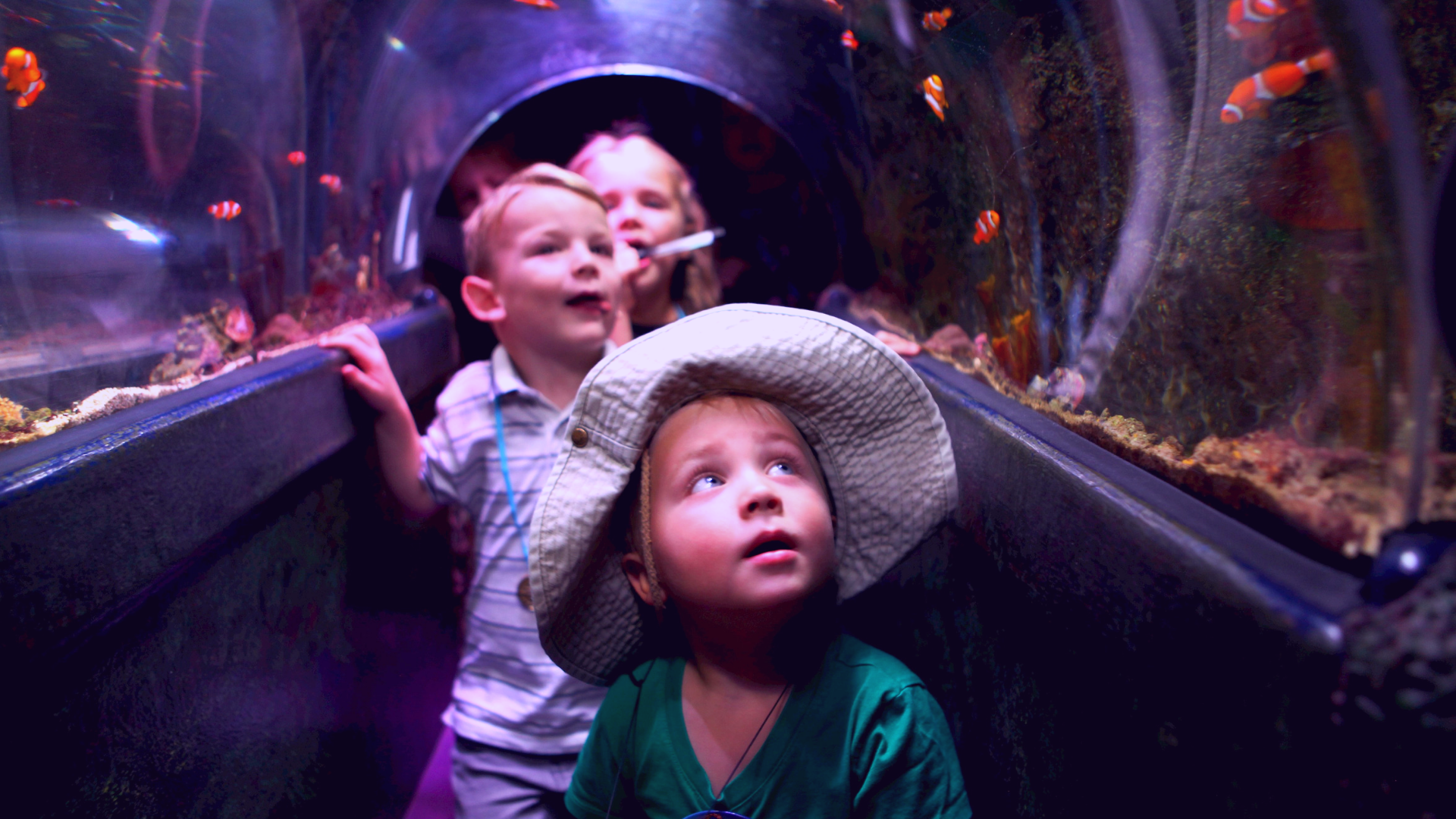 Coral Reef Tunnel at SEA LIFE