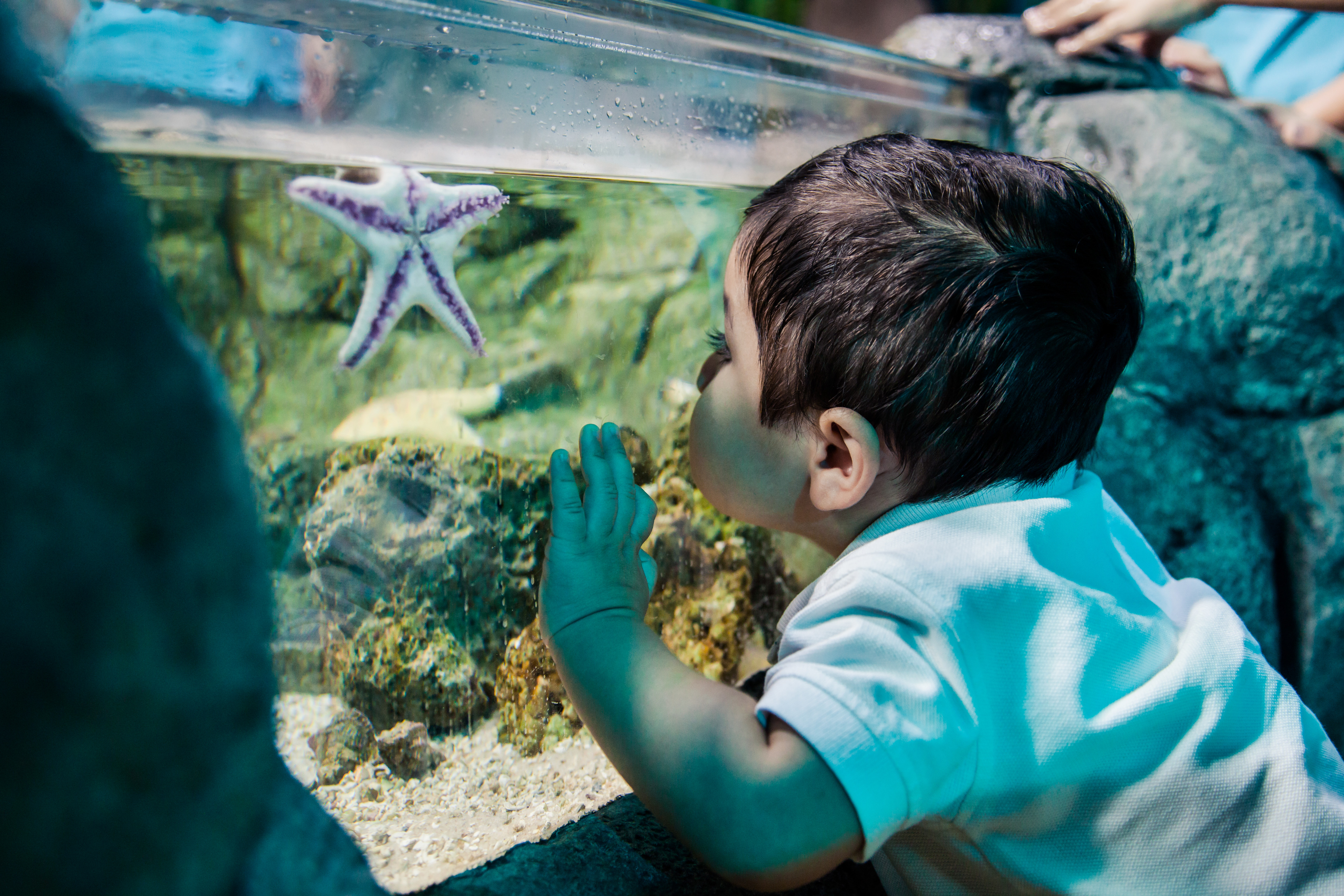 Sealife Schools Seastar Youngboy | SEA LIFE Aquarium