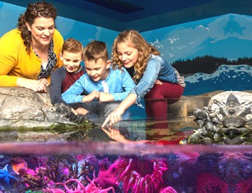 Touchpool | SEA LIFE Aquarium