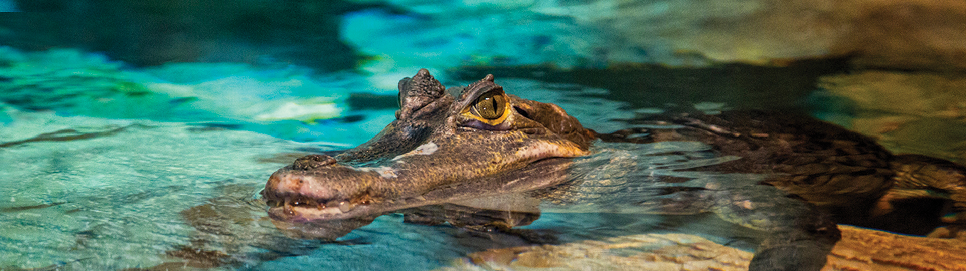 Croc Header | SEA LIFE at Mall of America