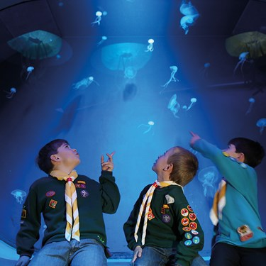 Sealife Groups Boyscouts | SEA LIFE Aquarium