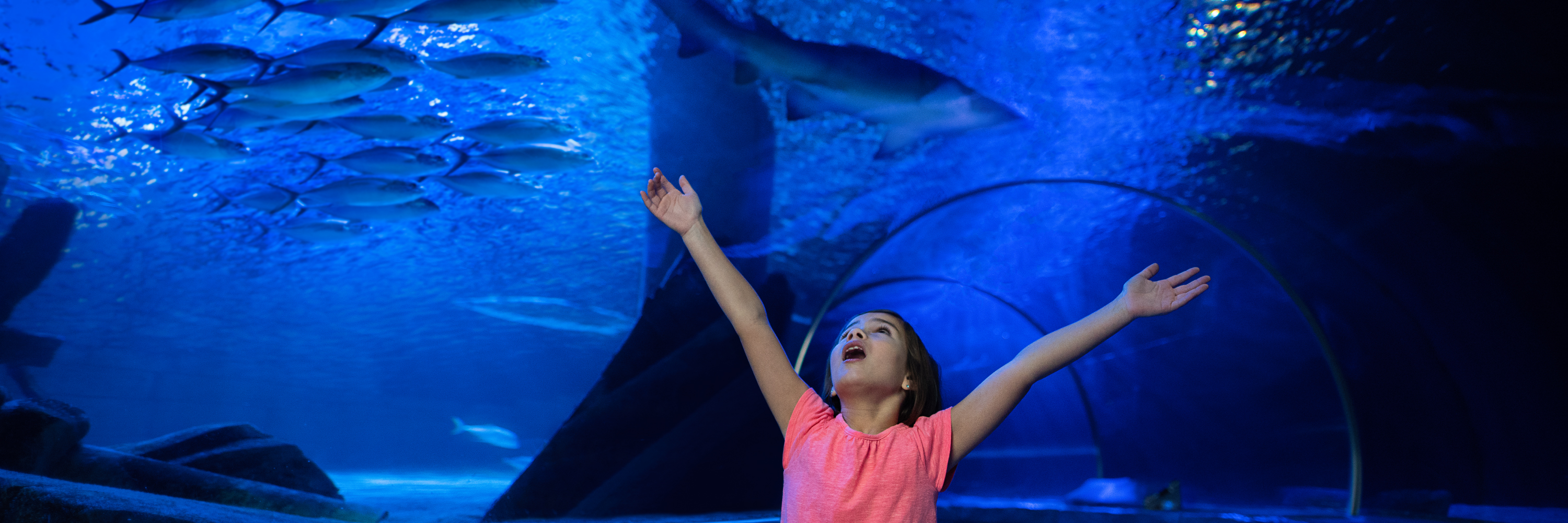 Girl In Tunnel | SEA LIFE Aquarium