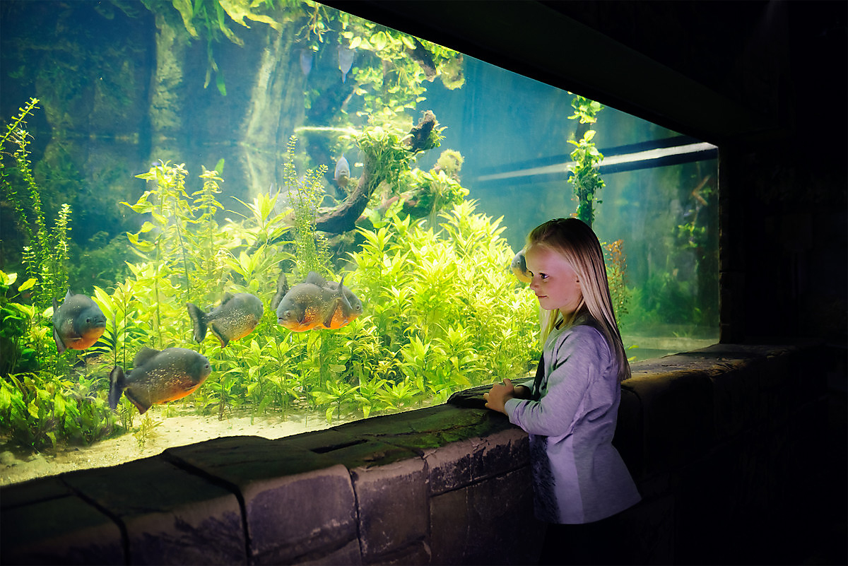 Girl And Red Bellied Piranha (1)
