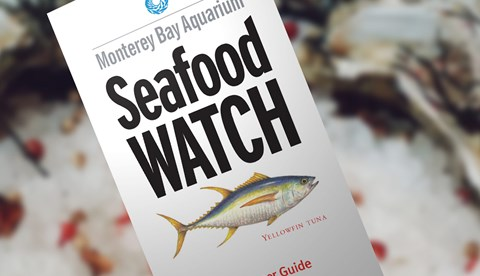 Seafood Watch | SEA LIFE Aquarium
