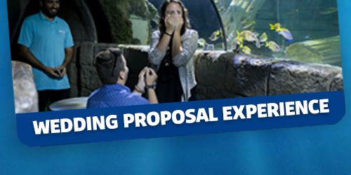 Wedding Proposal Experience