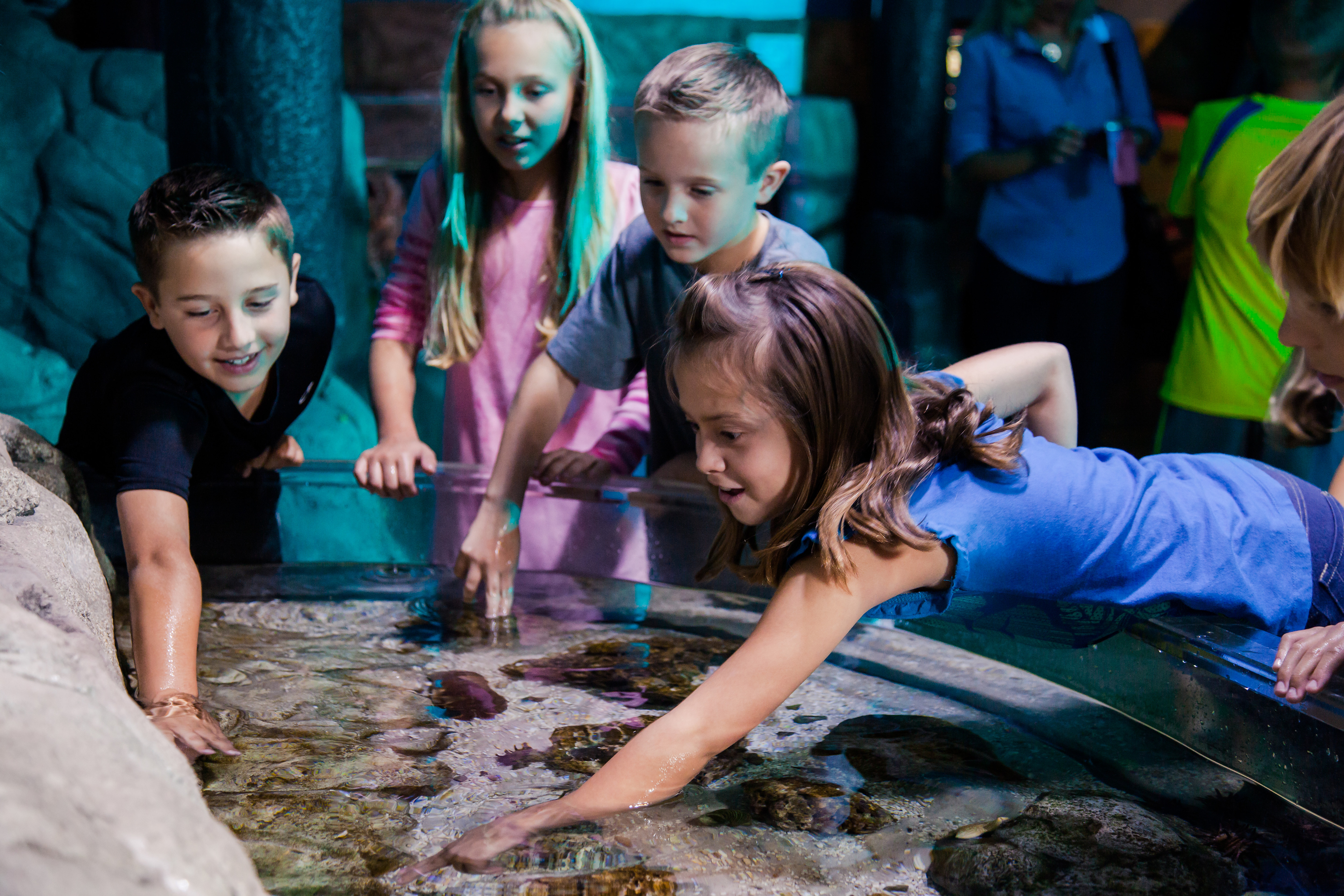 Sealife Groups Birthdays | SEA LIFE Aquarium