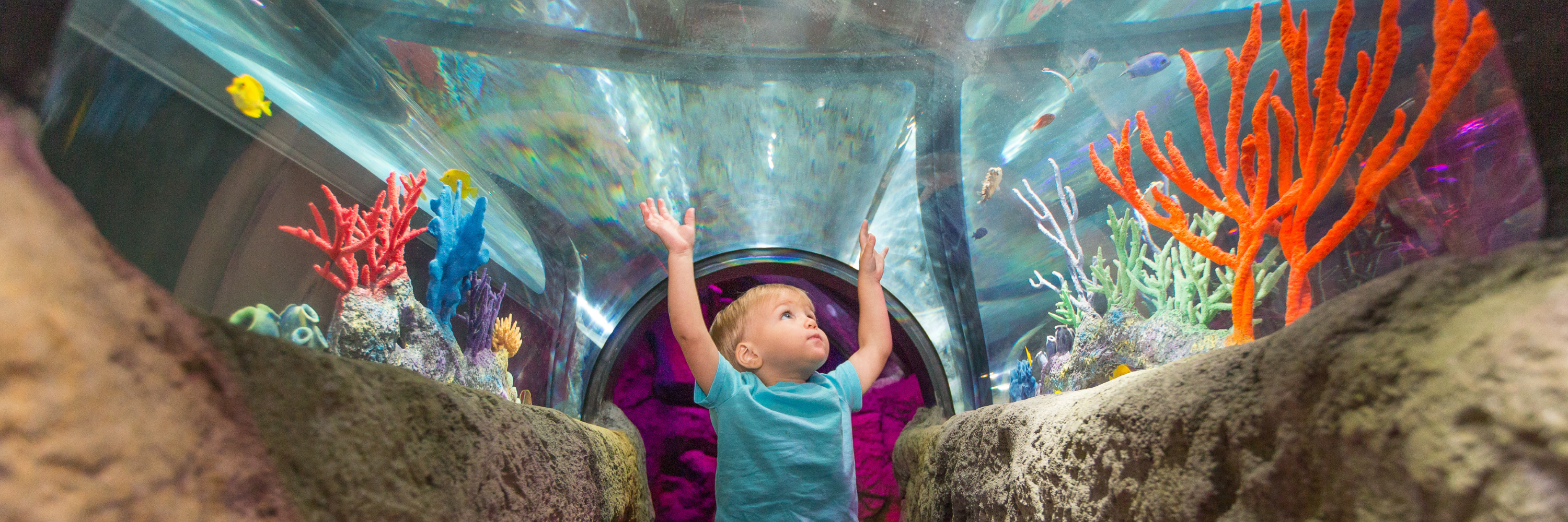 Child enjoying pop-up exhibit at SEA LIFE San Antonio