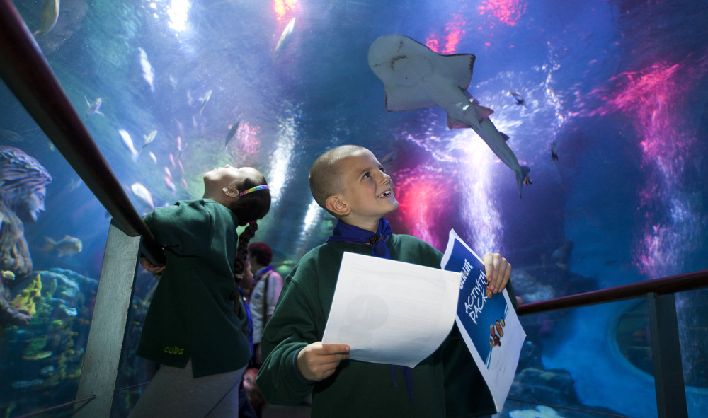 Sealife Schools Programs Activitypacks | SEA LIFE Aquarium
