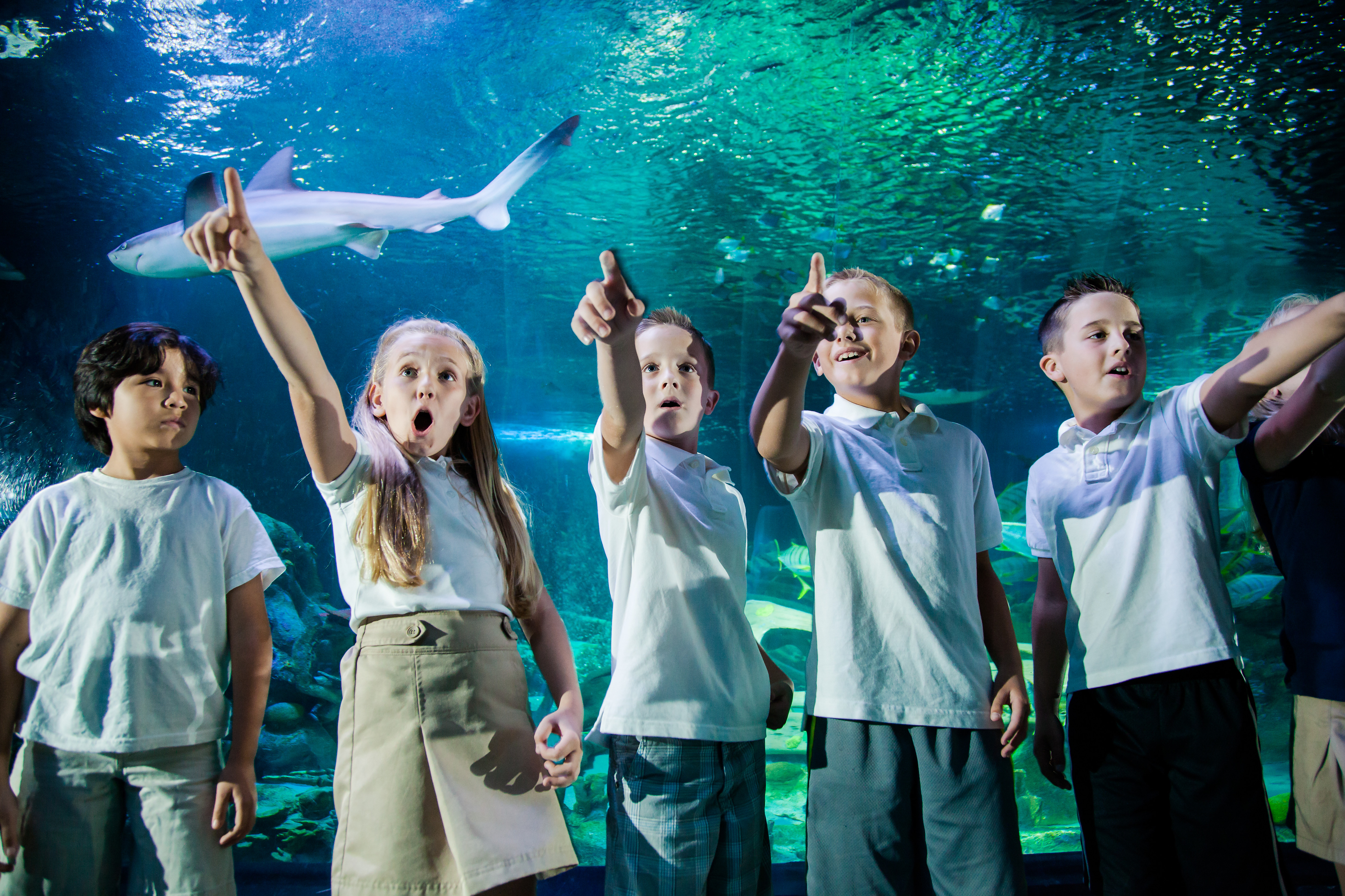 Child Pop Up 3000X1000 | SEA LIFE Aquarium