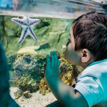 Meet The Creature | SEA LIFE Aquarium