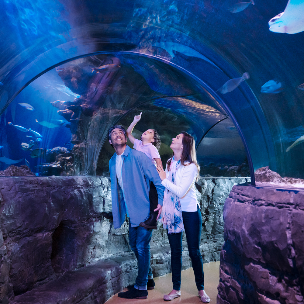 Ocean Tunnel | SEA LIFE Aquarium