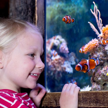 Nemo Girl | SEA LIFE Aquarium